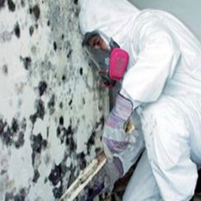Mold Remediation Working Supervisor