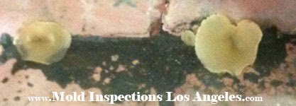REO Sales and Mold Inspections
