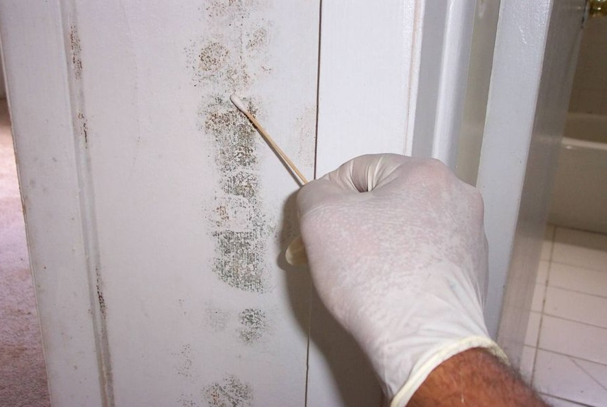 Mold Inspections Los Angeles.